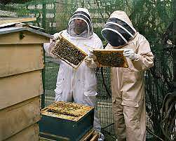Bee Keeping Intro