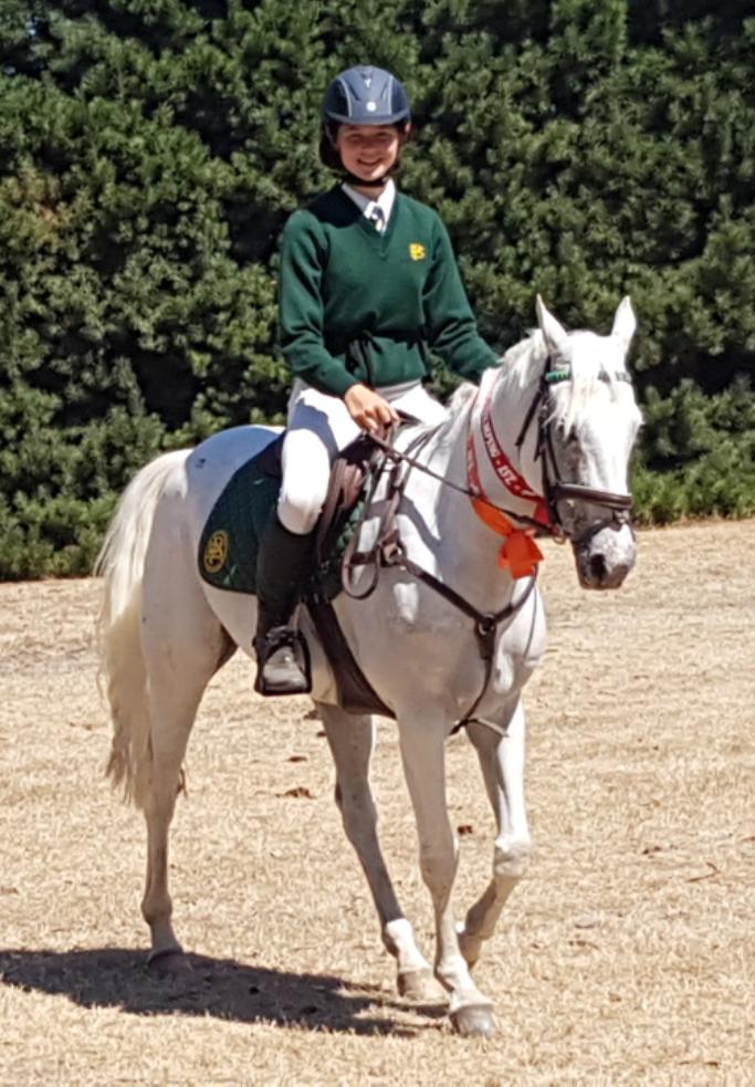 Pony 22 2 2019