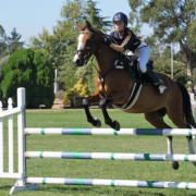 Show Jumping 22 2 2019