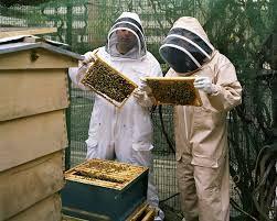 Beekeeping Intro
